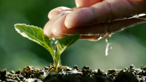 watering a plant in natural - plant stock videos & royalty-free footage