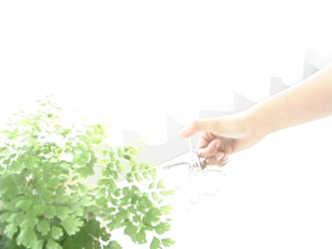 Watering a Plant With Spray Bottle