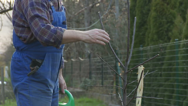 hd: watering a tree - watering can stock videos and b-roll footage