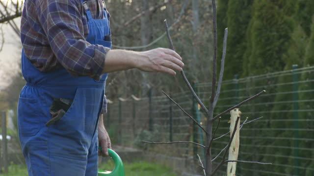 HD: Watering A Tree