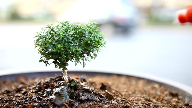 watering bonsai tree - plant pot stock videos & royalty-free footage