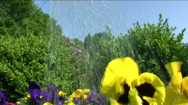 """watering can """"pouring flowers"""" hd - watering can stock videos and b-roll footage"""