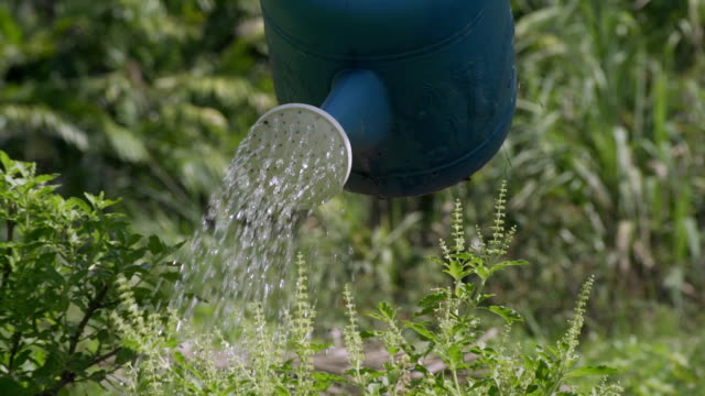 watering can pouring flowers - watering can stock videos and b-roll footage