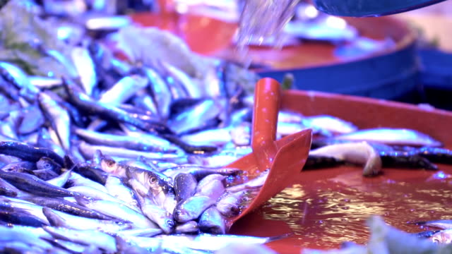 watering fish in fish market - anchovy stock videos & royalty-free footage