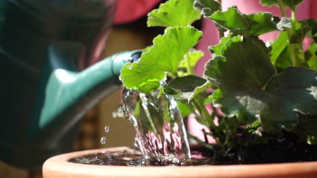 stockvideo's en b-roll-footage met watering flower pot. - water geven