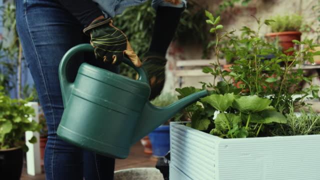 watering flowers in a diy plant pot. - flowerbed stock videos & royalty-free footage