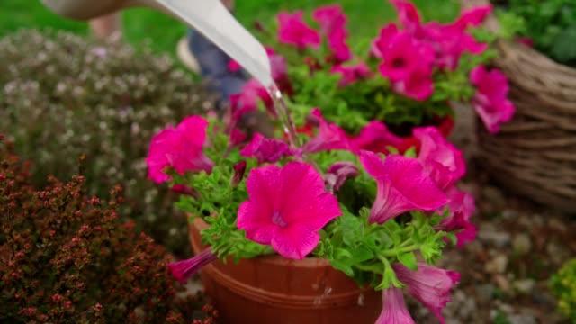 watering flowers in the garden - gardening glove stock videos & royalty-free footage
