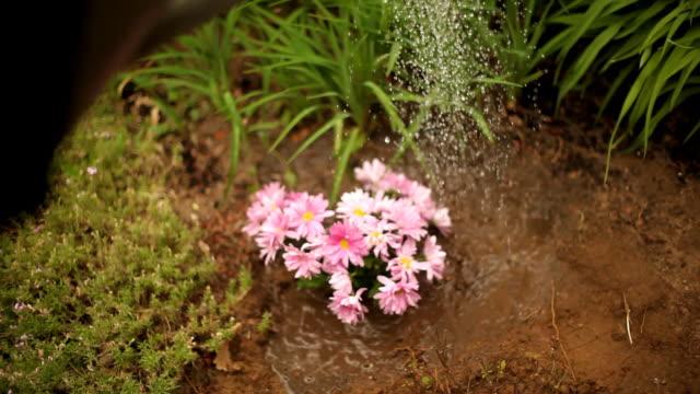 stockvideo's en b-roll-footage met watering flowers - gieter