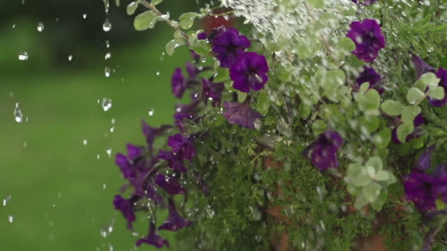 slow motion: watering flowers - watering can stock videos and b-roll footage