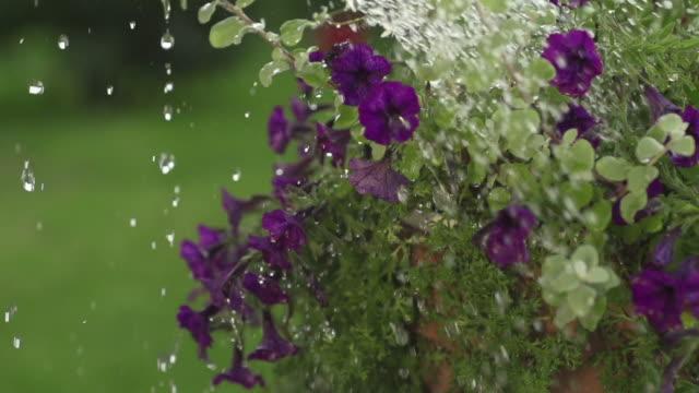 SLOW MOTION: Watering Flowers