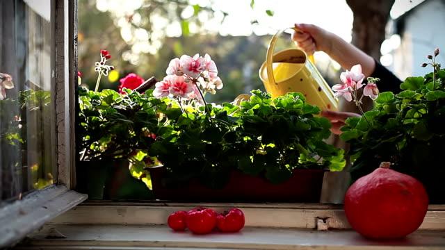 hd: watering flowers - watering stock videos & royalty-free footage
