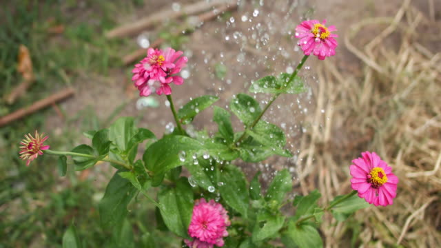 watering flowers with a watering can - watering can stock videos and b-roll footage