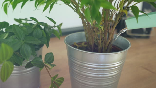 watering green plant cinemagraph. - watering can stock videos and b-roll footage