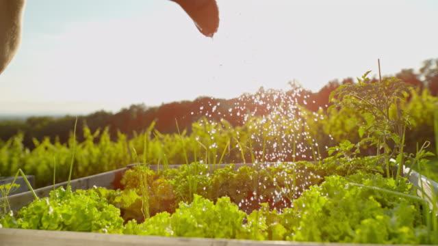 vídeos de stock, filmes e b-roll de slo mo molhar cabeças de alface - processo vegetal