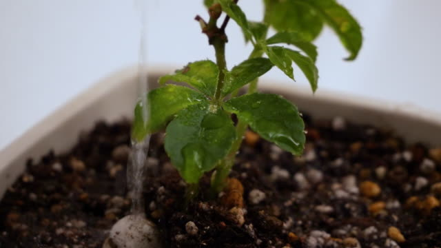 watering houseplants. - 観葉植物点の映像素材/bロール