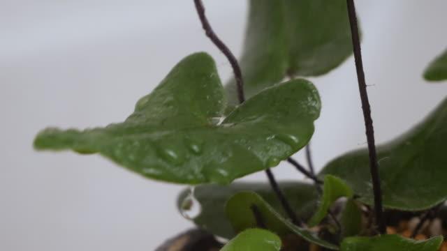 watering houseplants with a mist. - 観葉植物点の映像素材/bロール
