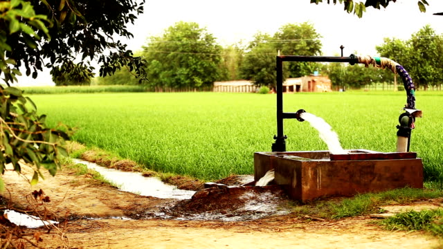 watering in rice paddy - agricultural machinery stock videos and b-roll footage