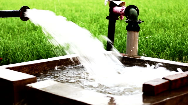 Watering in rice paddy
