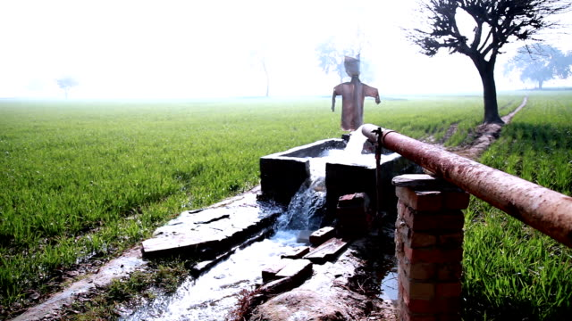 watering in the green field using tubewell - freshwater stock videos & royalty-free footage
