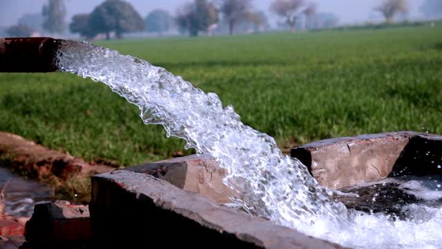 stockvideo's en b-roll-footage met water in de groene tarweveld tijdens winterseizoen - irrigatiesysteem