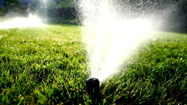 watering lawn sprinkler irrigation - prato rasato video stock e b–roll