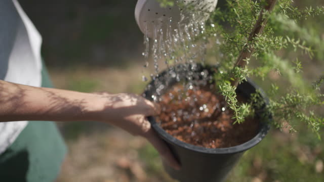 4k watering manuka flower pot at outdoor with sunlight - watering can stock videos & royalty-free footage