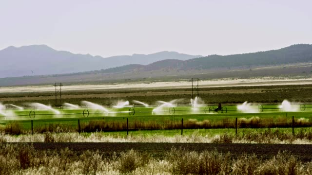 Watering of the pastures in Nevada