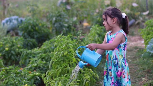vídeos de stock e filmes b-roll de watering on plant - espalhar