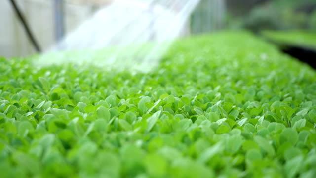 slo mo watering organic vegetables. - hose stock videos & royalty-free footage