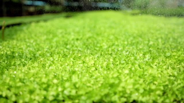 SLO MO, arrosage des légumes biologiques.