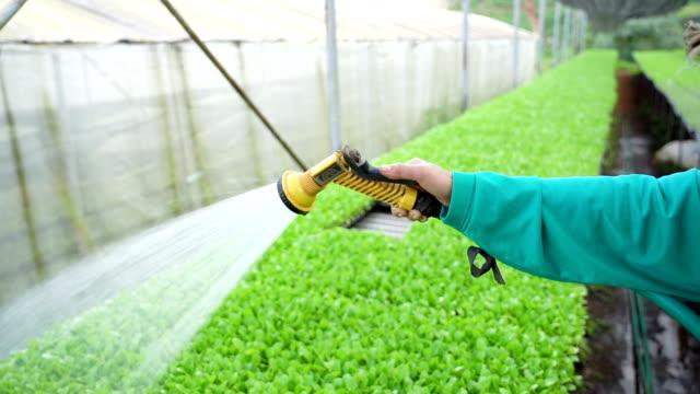 SLO MO watering organic vegetables.