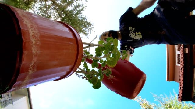 watering plant in pot - plant pot stock videos & royalty-free footage