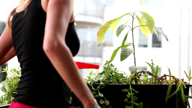 watering plants at spring begin - balcony stock videos & royalty-free footage