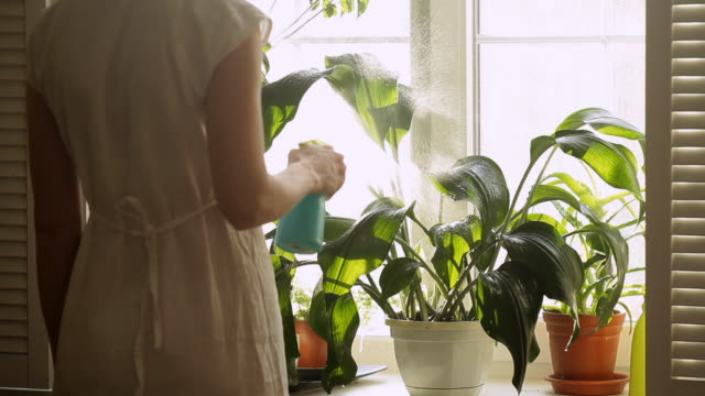 stockvideo's en b-roll-footage met watering plants - water geven