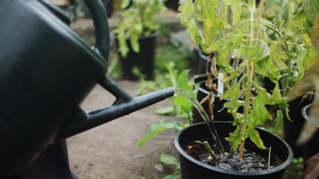 watering plants - community garden stock videos & royalty-free footage