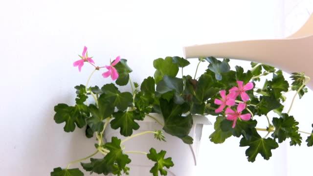 Regar plantas vaso