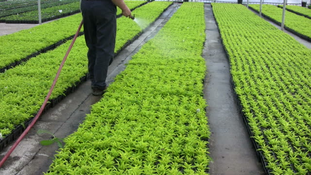 Watering the crop