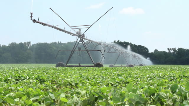 watering the farm crops - soya bean stock videos & royalty-free footage
