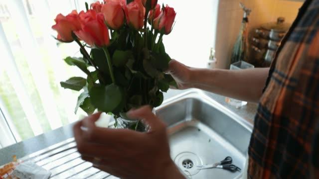 vídeos de stock e filmes b-roll de watering the flowers - jarra recipiente
