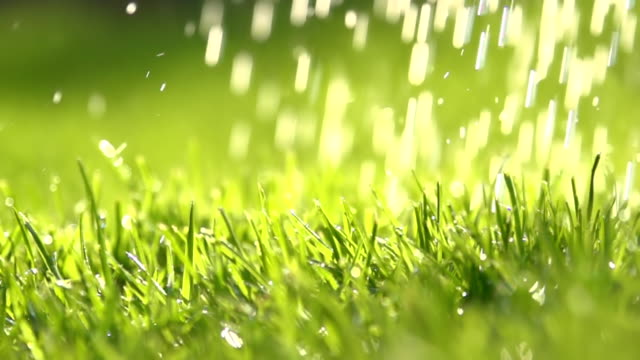 hd super slow mo: watering the grass - grass stock videos & royalty-free footage