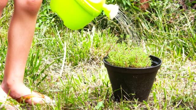 stockvideo's en b-roll-footage met hd: watering the plant - gieter