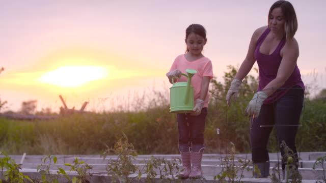 vidéos et rushes de l'arrosage au coucher du soleil - parterre de fleurs