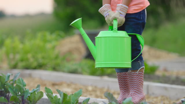 watering the plants - one girl only stock videos & royalty-free footage