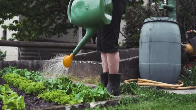 watering vegetable garden - front or back yard stock videos & royalty-free footage