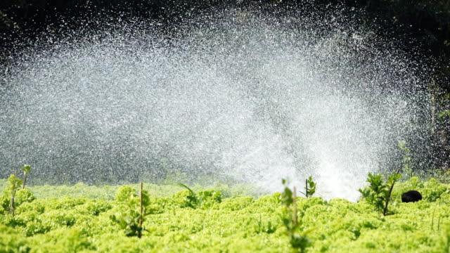 deliziosi verdure - attrezzatura per l'irrigazione video stock e b–roll