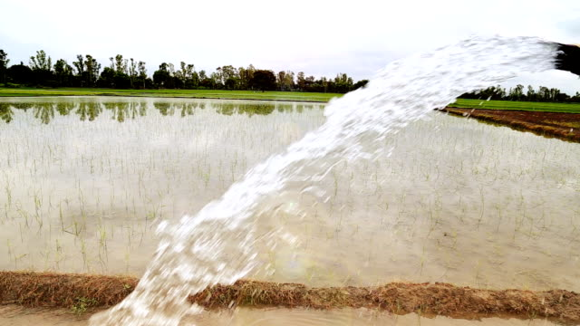 watering (rice paddy) - agricultural machinery stock videos and b-roll footage