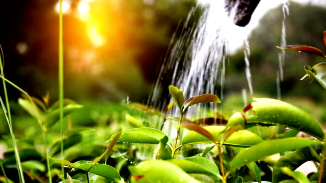 watering - lawn stock videos & royalty-free footage