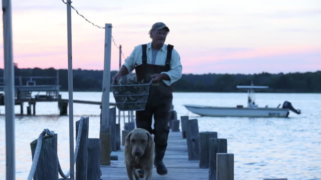 ws waterman carrying basket of fresh oysters down fishing dock with dog / oyster, virginia, usa - 運ぶ点の映像素材/bロール