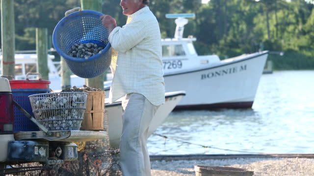 MS TU Waterman Sorting Baskets of Clams Near Dock / Oyster, Virginia, USA
