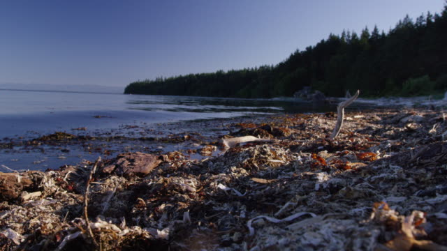 waterscape of cortes island - water pollution stock videos & royalty-free footage